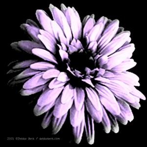 Pale-Purple-Flower-DB-2015-2