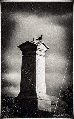 bird-on-grave